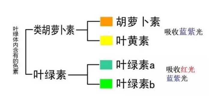 水吸收丙酮的原理_溴化锂吸收式制冷原理